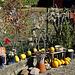 Herbstliche Grüße -Autumnal greetings -HFF