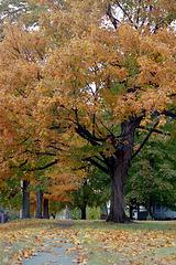 Fall Tree, 1995