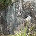 DSCN1969 - Pedra Preta do Norte gravura