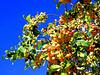 Sier appeltjes