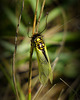 Eine Insektenrarität - A really rare insect