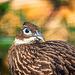Aviary bird3