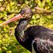 Aviary bird5