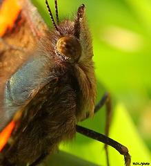 Regard de papillon