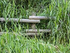 Shy Fence