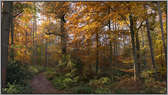 Autumn leaves - Ladybank wood - Eckington.