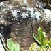 DSCN1975 - Pedra Preta do Norte gravura