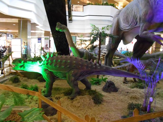 DSCN2795 - Ankylosaurus magnoventris, Ankylosauridae Ornithischia