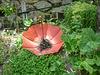 Autre curiosité de ce jardin extraordinaire...
