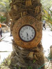 Reloj en palmera
