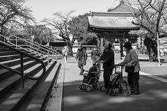 Elderly women with walker