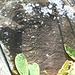 DSCN1976 - Pedra Preta do Norte gravura