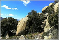 In amongst the granite boulders.