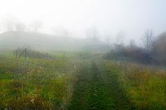 Ein Nebeltag im Naturschutzgebiet - A foggy day in a nature reserve