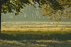 karge Weide im Morgenlicht
