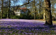 Purple Carpet...