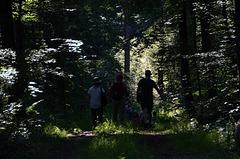 Im Wald da sind die Räuber...