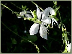 ** Bon jeudi ; il fait froid- 2 ; bien blanc ce matin mais beau soleil l'après midi **