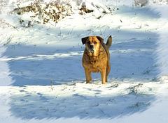 DANA: Sports d'hiver [ON EXPLORE]
