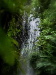 magie dans la forêt d'Emeraude 1