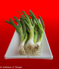Scallions on Red 071216