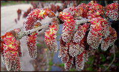 Catkins,  Valdemorillo, Madrid province. PLEASE STAY, DON'T RUN AWAY!!!