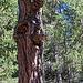 Der Baum hat ein Gesicht - The Tree has a Face