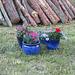 Blumentöpfe warten schon