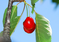 Agreeable conversations are like cherries, they come one after the other ...