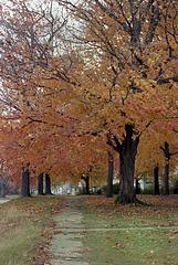 Fall Tree, 1982