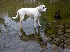 Branco & his reflection