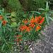 Des carottes ? Non, des fleurs.