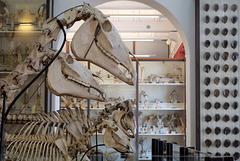 Musée Fragonard - Ecole Nationale Vétérinaire d'Alfort