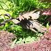 Ein Vogel steht im Walde... ©UdoSm