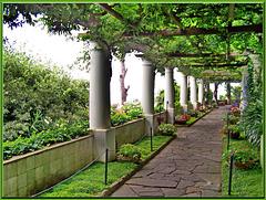 Capri : Villa San Michele - (807)