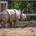Baby rhino7