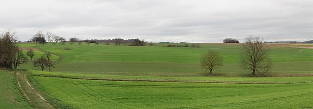 Grüne Felder im Winter