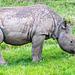 Baby rhino9