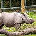 Baby rhino14