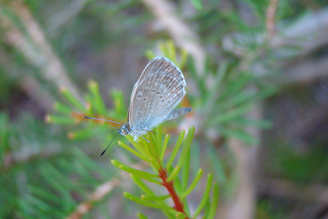 sleeping butterfly after rain