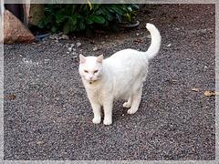 """La lessive """"Le chat"""" lave plus blanc, c'est bien connu !"""