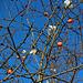 Exotische Früchte im Winter