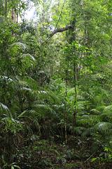Jindalba Rainforest