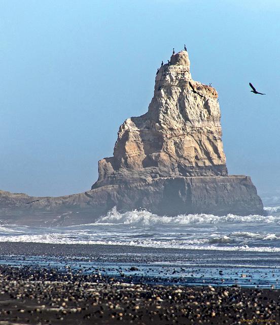 Vogelinsel (PiP)