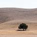 Monterey County / CA-198 (# 0578)