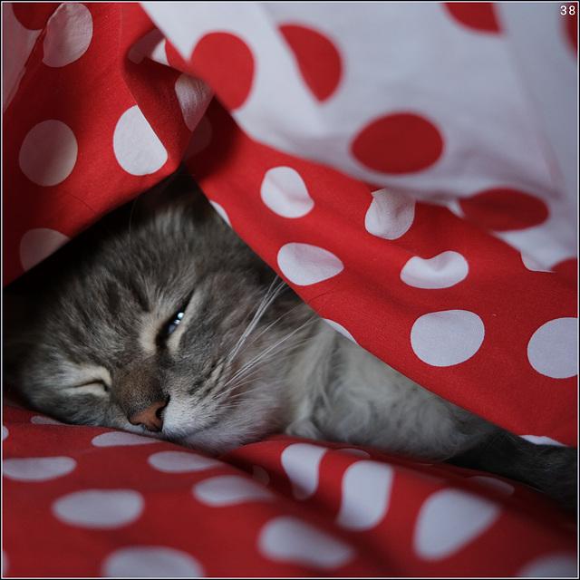 le chat aux petits pois