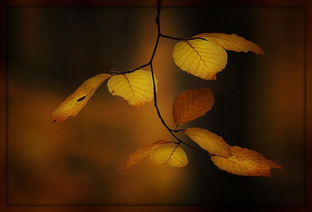 kleine Herbstwelt 15