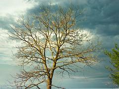1 (46)...austria tree baum spring