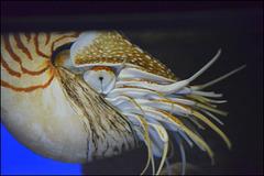 nautilus - waikiki aquarium