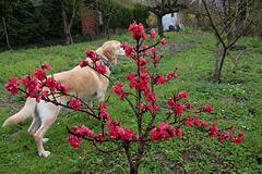 Blasko au jardin